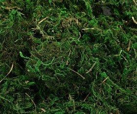 Mech dekoracyjny zielony duża paczka 100 g/op. ok 1.5 litra